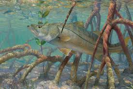 mangroves-fish-healthy